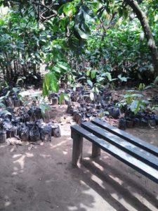Cocoa Initiative in Akwa Ibom State