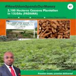 AGRICULTURAL RENAISSANCE IN AKS - CASSAVA CULTIVATION